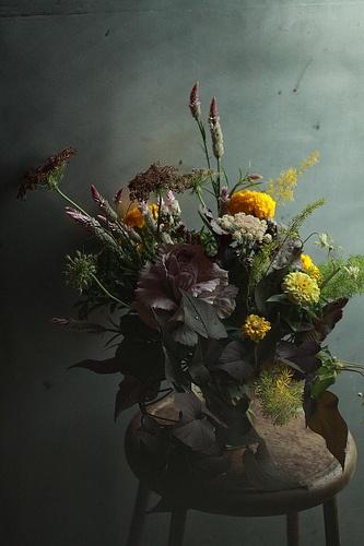 Zinnia, Brassica, Ammi/Daucus/Foeniculum/Anethum, Pennisetum,
