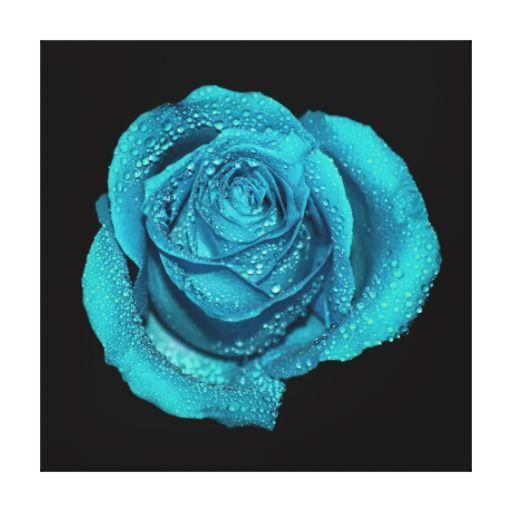 Beautiful Teal Color Rose Original Photography Canvas Prints