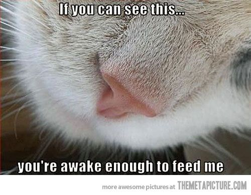 this is soo my cat