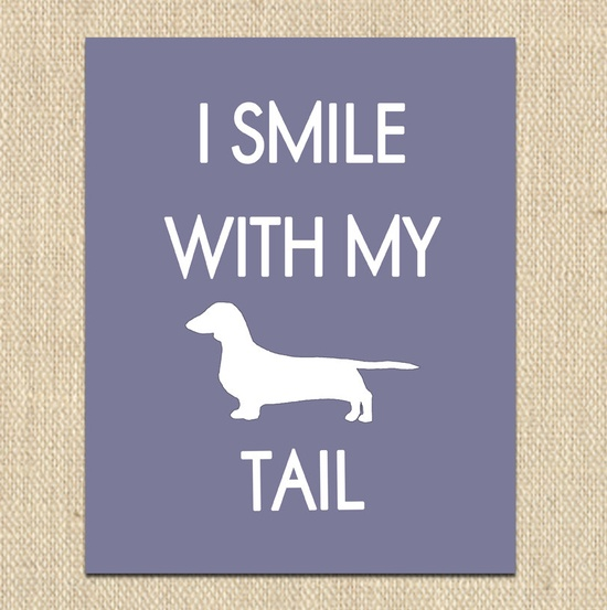 """""""I smile with my tail."""" D'awww!"""