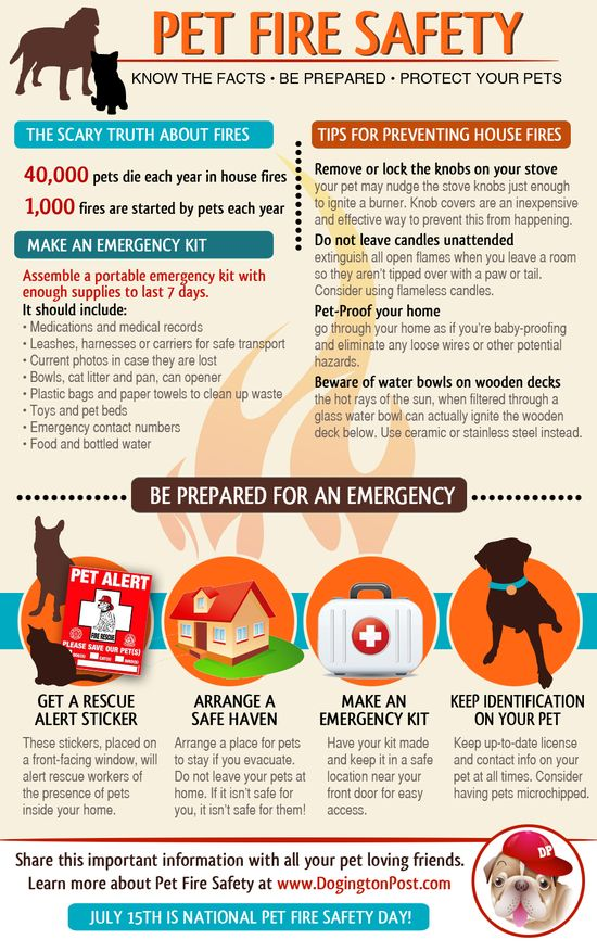 Pet Fire Safety - infographic