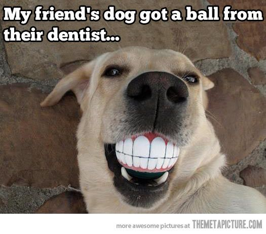 Dog gets a present from the dentist…