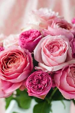 shades of #pink #roses