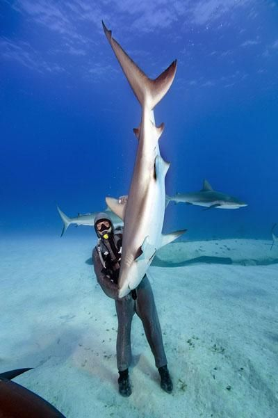 Italian diver Cristina Zenato holds a 10-foot shark in her hands in the tropical waters of the Caribbean. She is able to handle the sharks by rubbing hundreds of jelly-filled pores around the animal's nose and mouth, an action that brings on a natural paralysis that can last for up to 15 minutes. In that amount of time, Zenato, who has been doing this work for 15 years, is able to tend to injured sharks, remove parasites and teach other divers.