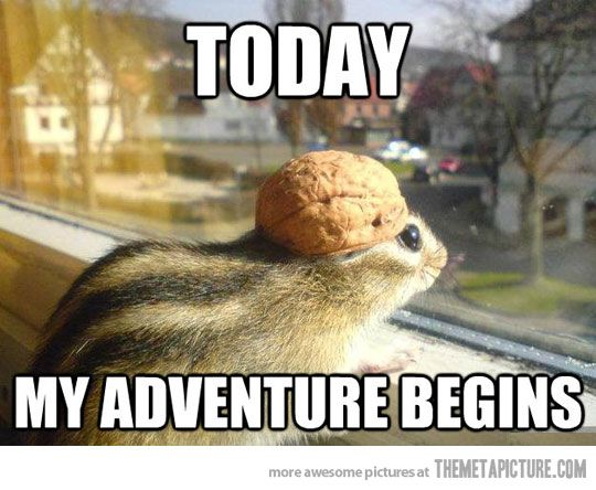Adventure Chipmunk