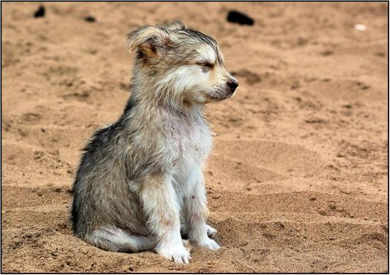 baby wolf. SO ADORABLE