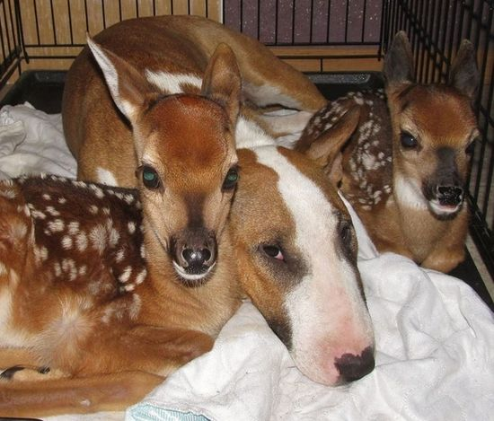 These fawns and this dog.
