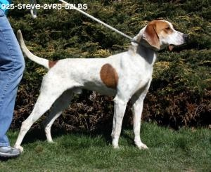#WVIRGINIA #URGENT ~ Steve is an #adoptable Hound Dog in #Beckley. A very sweet guy loves attention.  He needs a family that will love & include him- providing plenty of excersize & attention. He's in a GASSING SHELTER -- & would like to head on home straight away ? #Adopt him at the HUMANE SOCIETY OF RALEIGH COUNTY   Tue-Sat 11a-4:30p  325 Gray Flats Road   Beckley, WV 25802   Ph 304-253-8921 mailto:rcpets@hot...