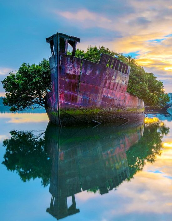 SS Ayrfield shipwreck in Homebush Bay, Sydney, Australia
