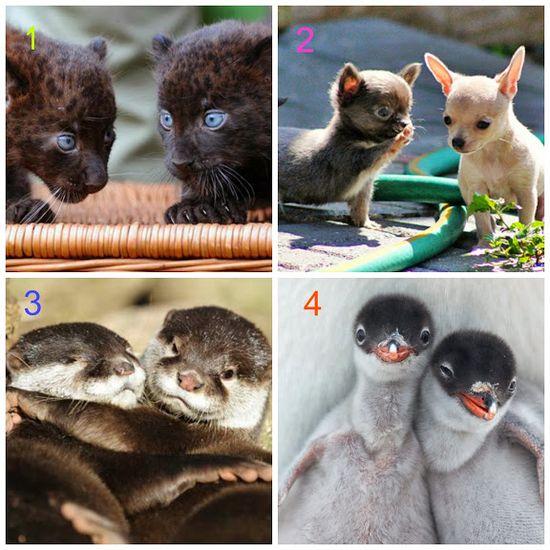 Baby animals - via  Mother Nature