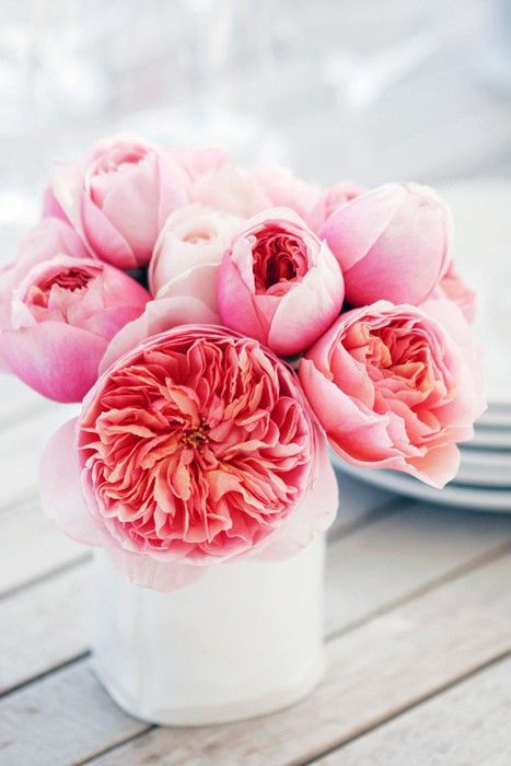 Coral Pinks // white vase, pink flowers, coral flowers, pink bouquet, pink floral arrangement, simple floral arrangement