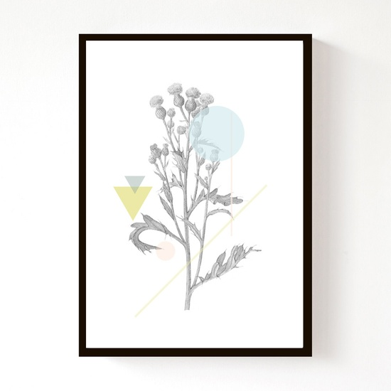 NEW - Creeping Thistle Geo - A4 Print. £15.00, via Design Sponge