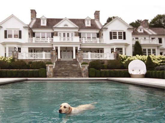 big house, big pool, cute puppy
