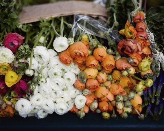 Ranunculus in Paris market
