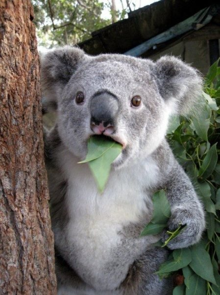 HAHAHAHA!  What surprised you so much, koala?