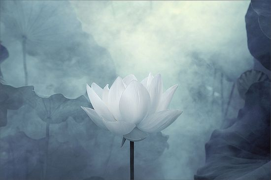 White Lotus Flower Surreal Series - DD0A7187-2-1000 by Bahman Farzad, via Flickr