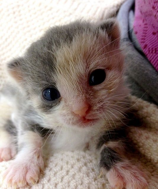 Baby cat catpictures24.com... #BabyCat, #BabyCats, #CatPics, #CuteCat, #LittleCat, #LovelyCat, #LovelyCats, #SmallCat