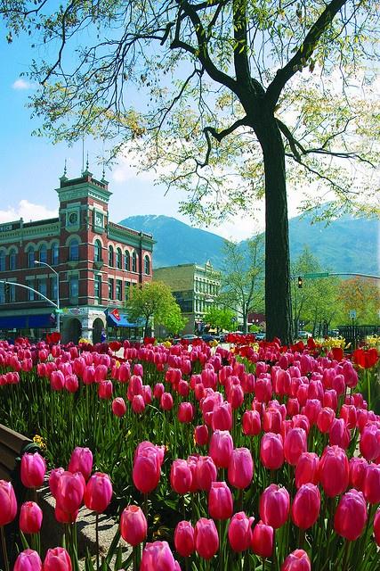 Down town Provo Utah