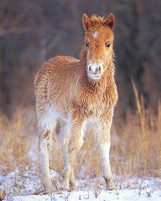 Assateague Pony! Wild Horse  8x10 Baby Animal Photography by NatureIsArt on Etsy, $25.00