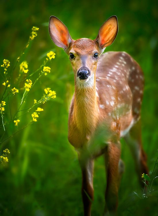 Fawn and flowers