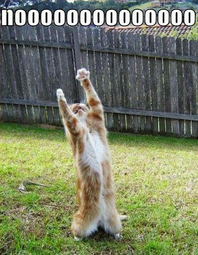 Noooooooooo - Funny Cat