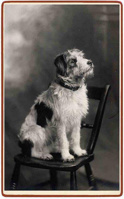 waiting for reward  via Libby Hall Dog Photo