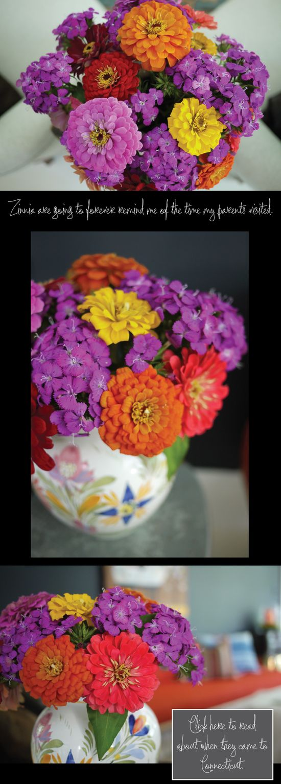 Honestly - @abcddesign has the most gorgeous photos on her site! Zinnia-Flower-Arrangements