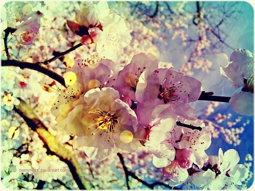 Japanese Cherry Blossom's have to be one of my fav's.