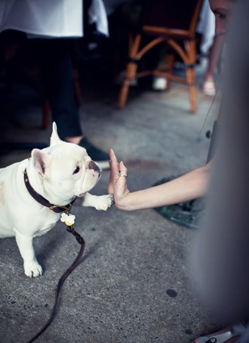 seriously?... frenchie high five.