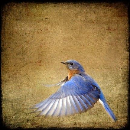 blue bird on wings