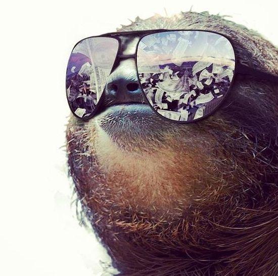 Boss sloth
