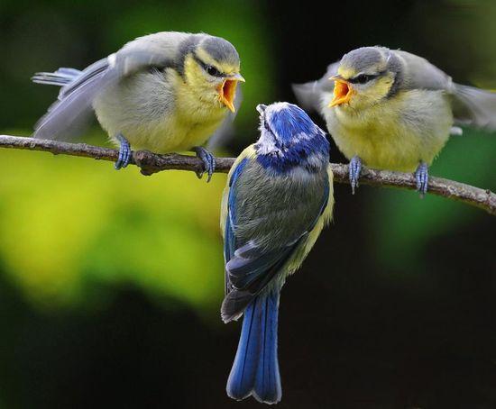 Haha. You tell him little birds.