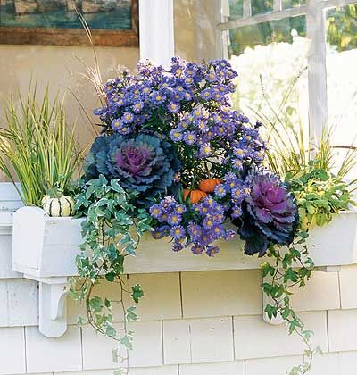 colorful window boxes