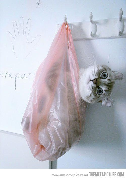 Cat in the bag…
