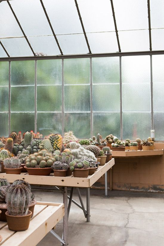 Magical cacti greenhouse, photographed by @Laure Lozano Lozano Lozano Lozano Lozano Lozano joliet.