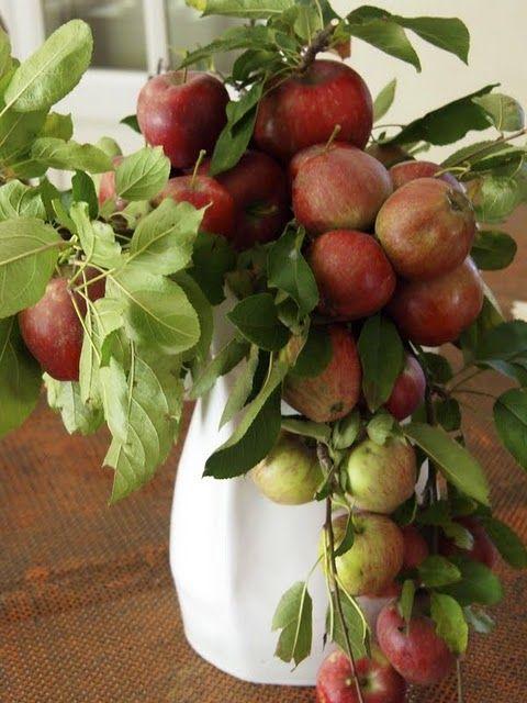Apples as an arrangement.
