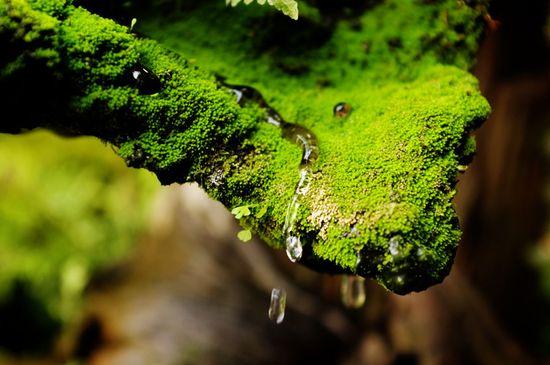 Fresh Moss Green