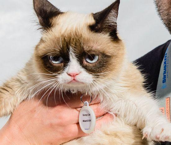 Grumpy Cat , we love Tard!!!