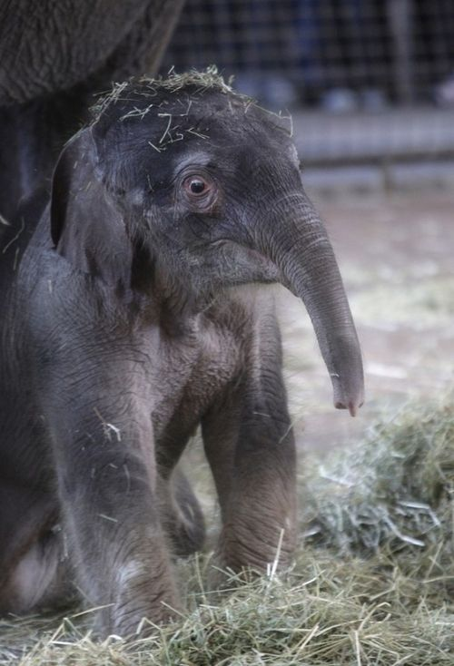 The Cutest Baby Elephant in the World via My Modern Metropolis