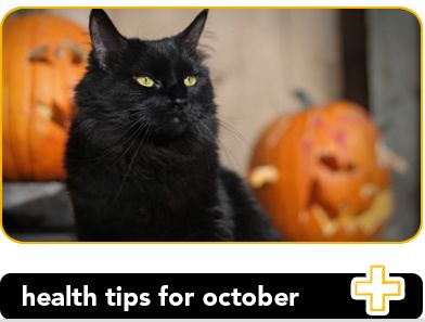 3 pet health tips to protect your pets in October