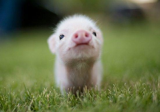 Baby pig!!