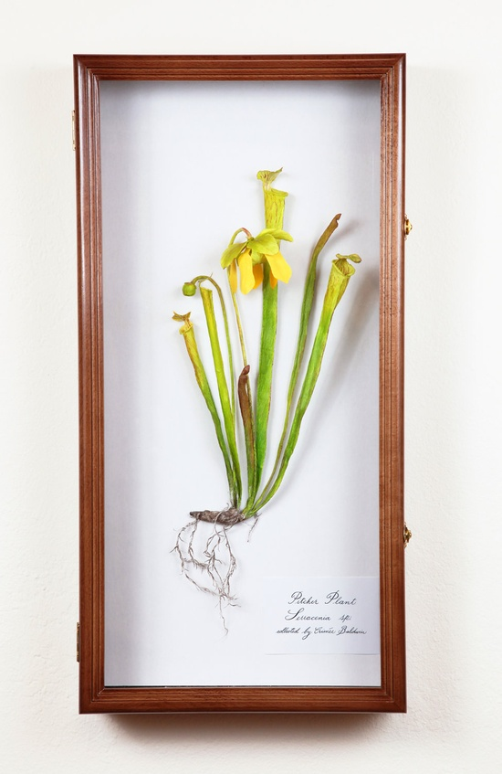 Paper Sculpture of Pitcher Plant on Etsy