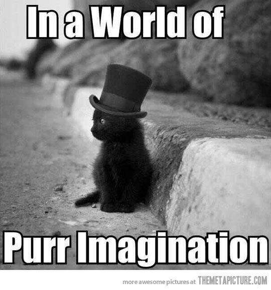 Willy Wonkat…