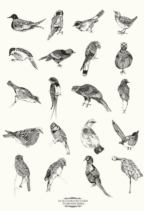 bird, bird, bird