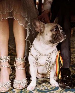 frenchie wedding style :)