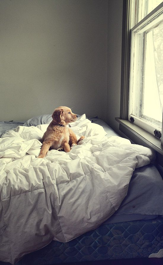Good morning puppy!