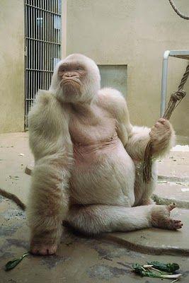 Amazing Albino Animals (45 Pics)