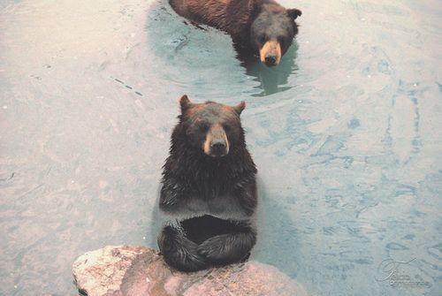 I love bears! ?