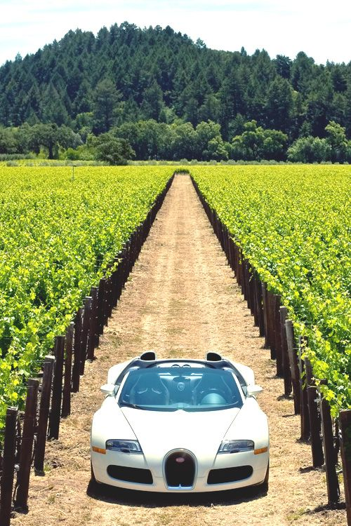 That one time, that I got so drunk, that I drove my Bugatti through my vineyard.