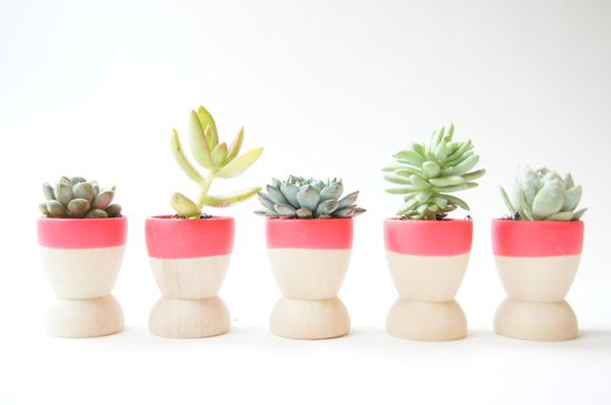 Place succulents in these neon mini planters for a colorful, eco-friendly wedding favor. #MarthaStewartWeddingsMagazine